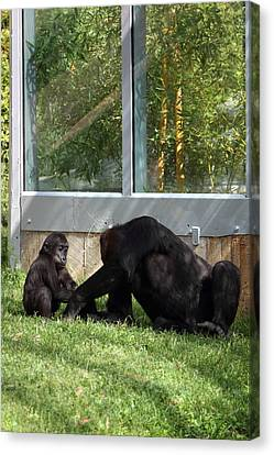 National Zoo - Gorilla - 011328 Canvas Print by DC Photographer