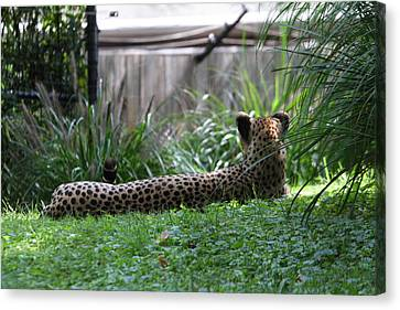 National Zoo - Leopard - 01135 Canvas Print by DC Photographer