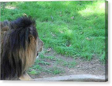 National Zoo - Lion - 01134 Canvas Print by DC Photographer