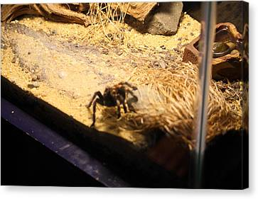 Spider Canvas Print - National Zoo - Spider - 01131 by DC Photographer