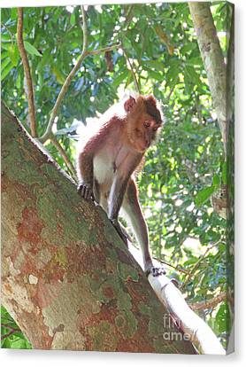 Native Palawan Monkey Canvas Print