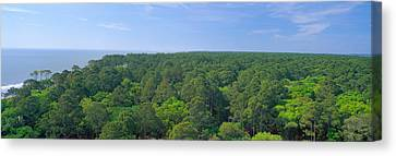 Native Trees At Hunter Island Canvas Print by Panoramic Images
