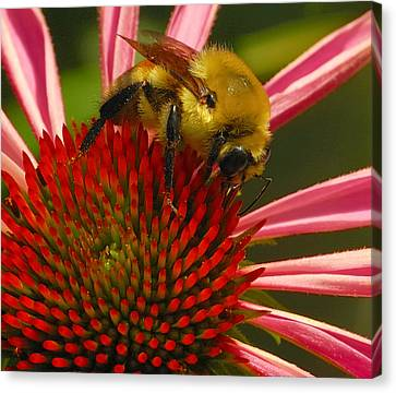 Natural Attractions  Canvas Print by Steven Milner