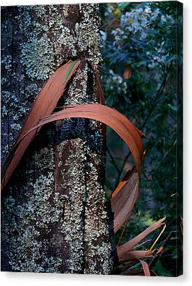 Canvas Print featuring the photograph Natural Bands 1 by Evelyn Tambour