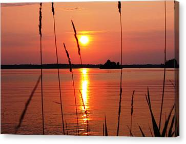 Natural Beauty Canvas Print by Pat Purdy