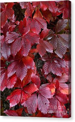 Natural Beauty Canvas Print by Randy Bodkins