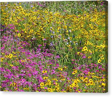 Natural Beauty Canvas Print by Tim Townsend