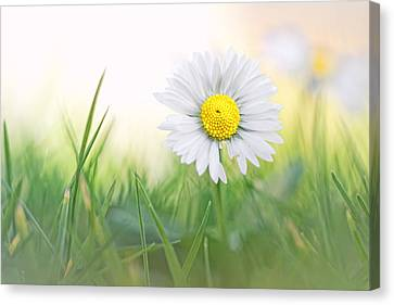 Natural Born Beauty... Canvas Print