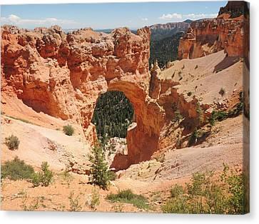 Natural Bridge At Bryce Canyon Canvas Print by Jayne Wilson