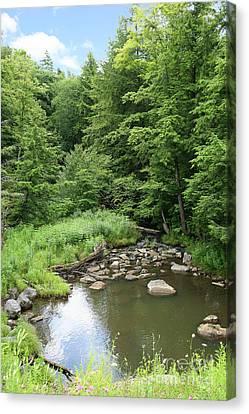 Natural Creek Landscape Canvas Print by Suzi Nelson