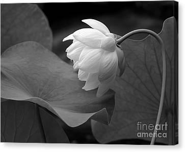 Florida Flowers Canvas Print - Natural Curve by Sabrina L Ryan