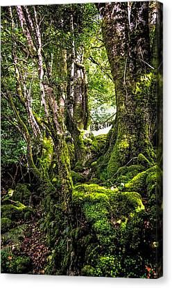Natural Emeralds. I Wicklow. Ireland Canvas Print by Jenny Rainbow