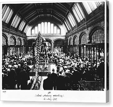 Natural History Museum's Diplodocus, 1905 Canvas Print by Natural History Museum, London