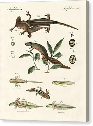 Natural History Of Sea Salamander Canvas Print by Splendid Art Prints