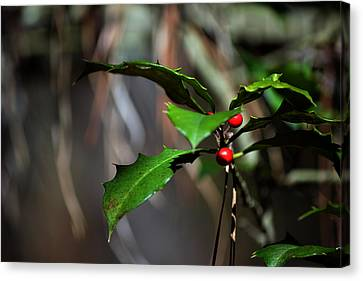 Canvas Print featuring the photograph Natural Holly Decor by Bill Swartwout