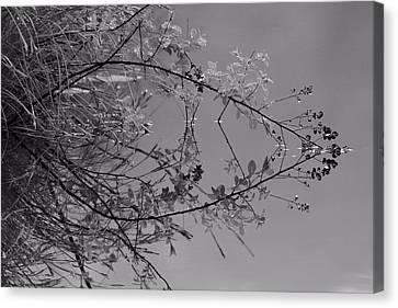 Natural Reflection Canvas Print by Karol Livote