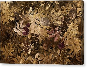Naturaleaves - Gla02f Canvas Print by Variance Collections