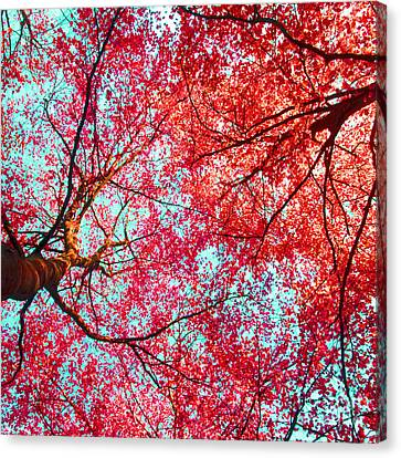 Canvas Print featuring the photograph Abstract Red Blue Nature Photography by Artecco Fine Art Photography