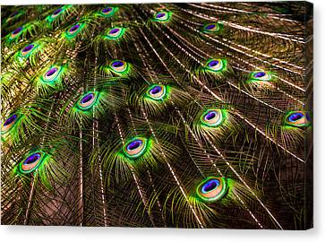 Nature Abstracts Canvas Print