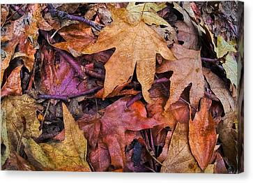 Nature  Canvas Print by Andrew Raby