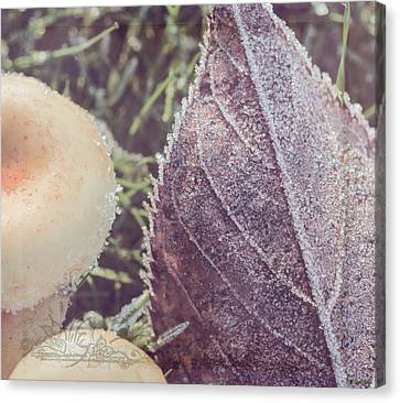 Nature Art - A Touch Of Frost Canvas Print by Jordan Blackstone