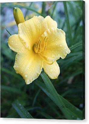 nature - flower- Yellow Lily After The Rain Canvas Print by Ann Powell