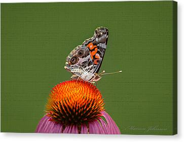 Nature Freedom Canvas Print by Marion Johnson