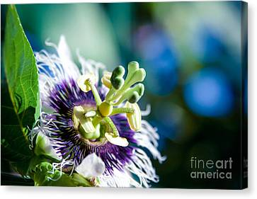 Nature In Poetry Canvas Print by Sharon Mau