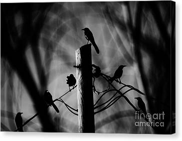 Canvas Print featuring the photograph Nature In The Slums by Jessica Shelton