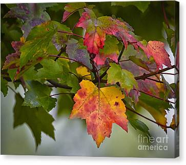 Nature Is All Aglow  Canvas Print by Kerri Farley