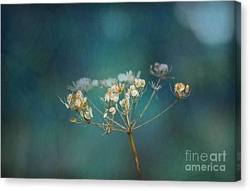 Nature Is Art Canvas Print by Liz  Alderdice