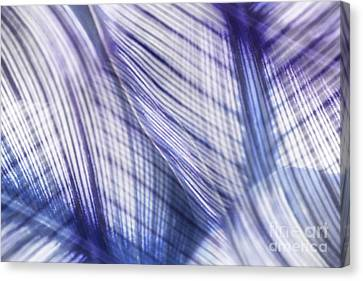 Nature Leaves Abstract In Blue And Purple Canvas Print by Natalie Kinnear