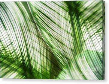 Nature Leaves Abstract In Green Canvas Print by Natalie Kinnear