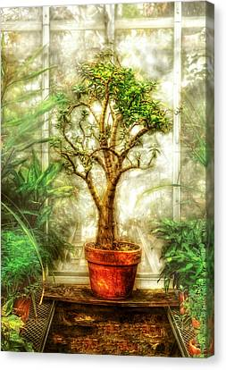 Nature - Plant - Tree Of Life  Canvas Print by Mike Savad