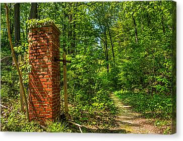 Nature Reclaims Canvas Print by Tim Buisman