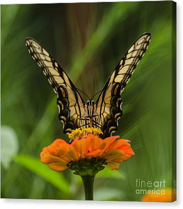 Nature Stain Glass Canvas Print by Donna Brown