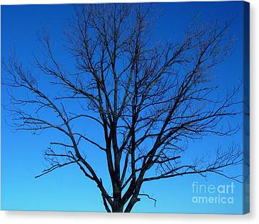 Nature Tree Canvas Print by Boon Mee