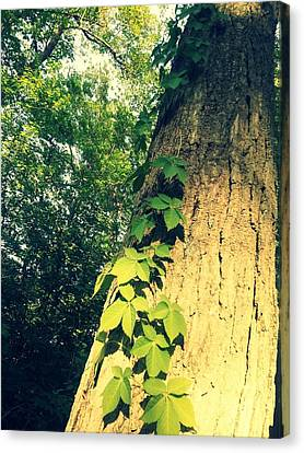 Brown Canvas Print - Nature Vine by Dawdy Imagery