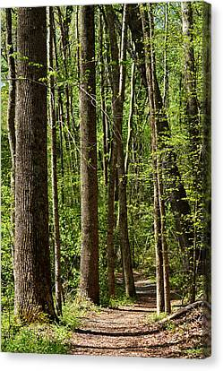 Nature Walk Early Spring Canvas Print