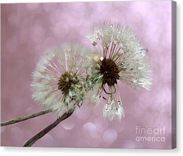 Nature Wish Canvas Print by Krissy Katsimbras