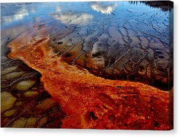 Canvas Print featuring the photograph Natureprint by Benjamin Yeager