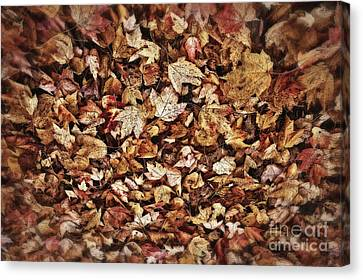Autum Abstract Canvas Print - Natures Abstract Of Fall Leaves by Lee Craig