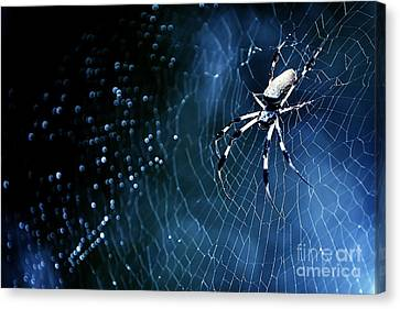 Nature's Architect 2014 Canvas Print by Katya Horner