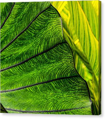 Nature's Artistry Canvas Print by Jordan Blackstone