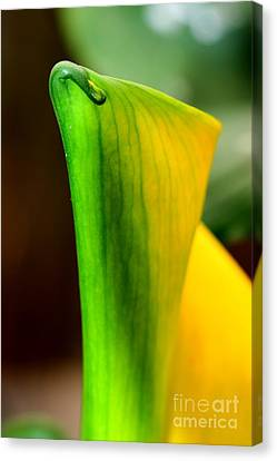 Nature's Artwork Canvas Print by Tap On Photo