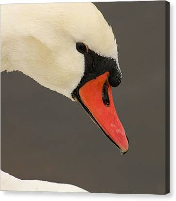 Natures Beauty Canvas Print by Bob and Jan Shriner