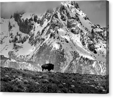 Nature's Beauty Canvas Print by Dan Sproul