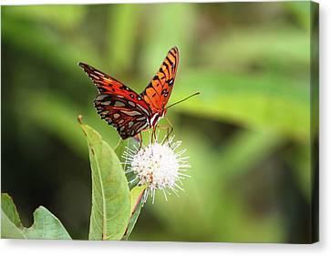 Natures Beauty Canvas Print