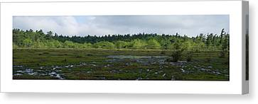 Canvas Print featuring the photograph Nature's Bog Lan 431 by G L Sarti