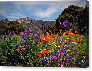 Canvas Print featuring the photograph Nature's Bouquet  by Lynn Bauer